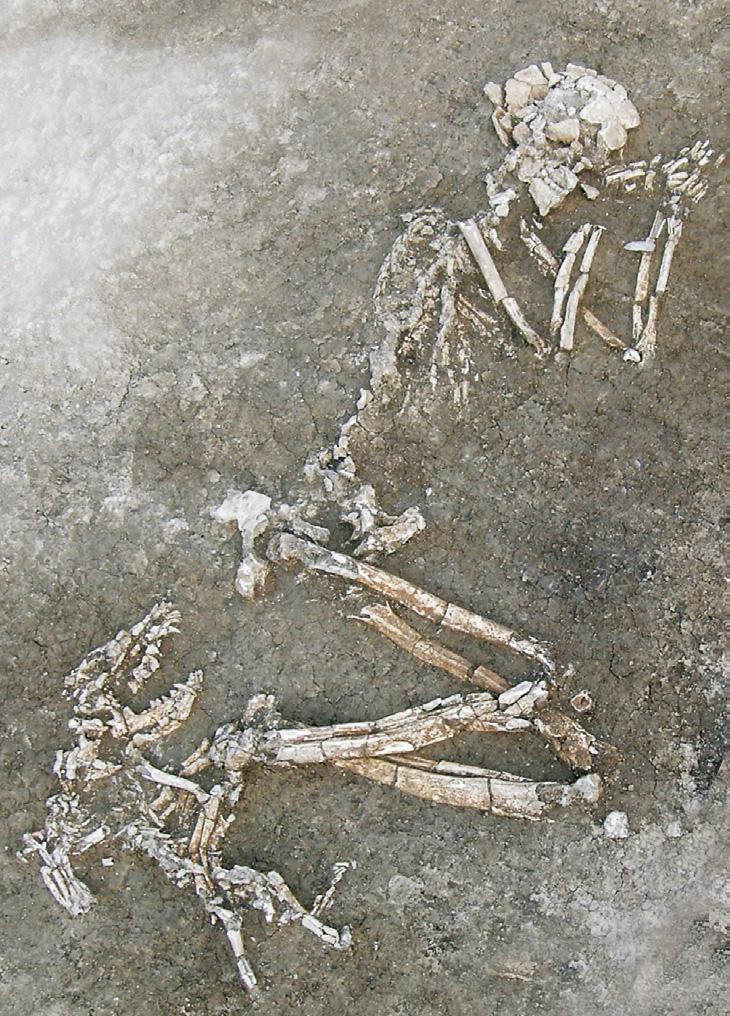 Il cane e l'uomo: storia, archeologia e immagini di una millenaria convivenza