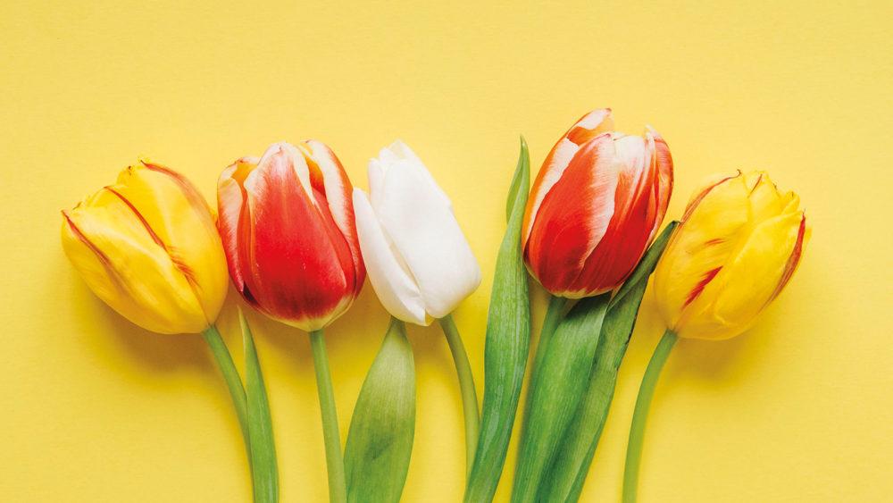 Il Presidente e tutto lo staff del Consorzio Oltrepò Mantovano vi augurano Buona Pasqua