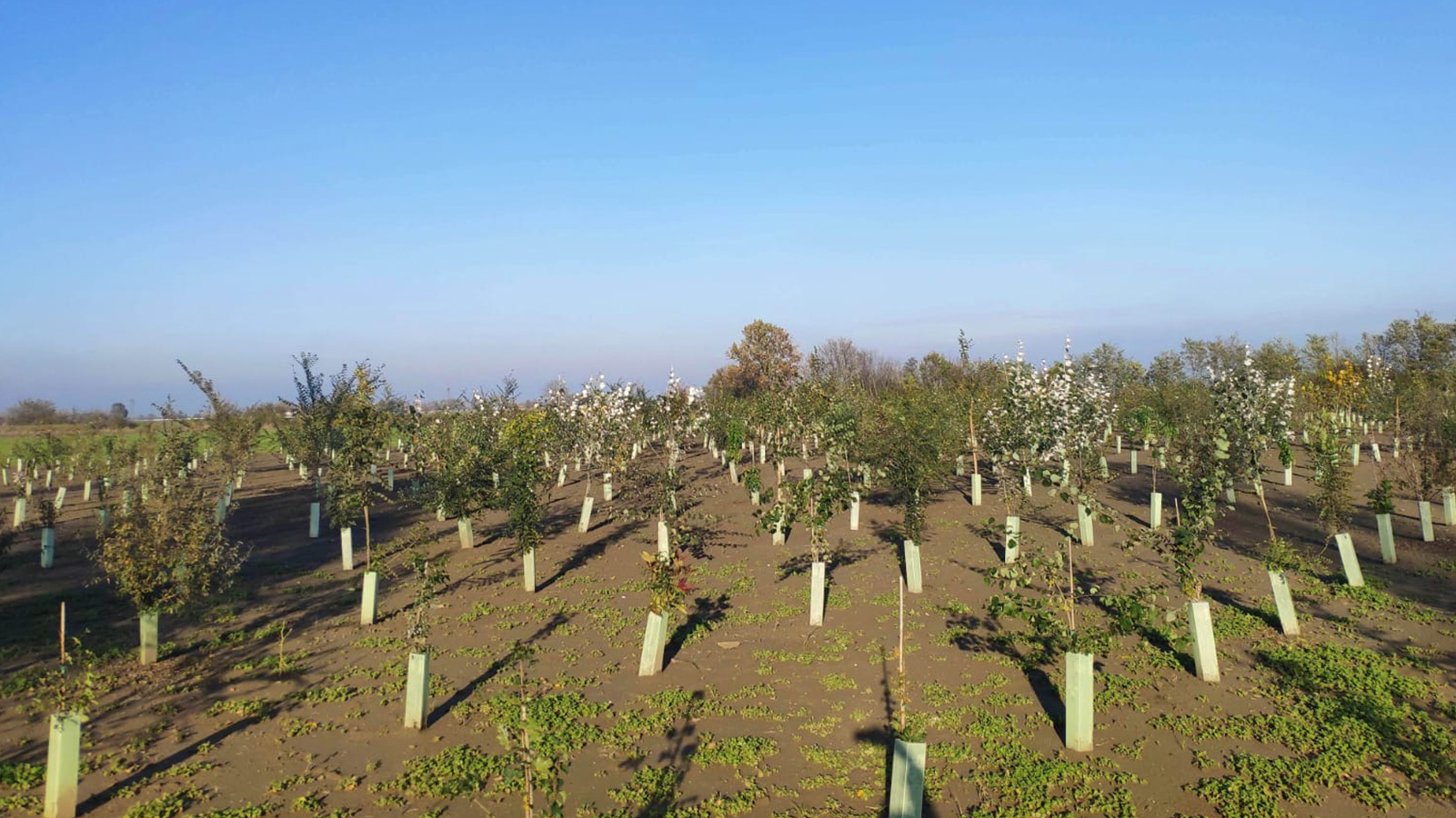 C'è un nuovo bosco nell'Oltrepò Mantovano