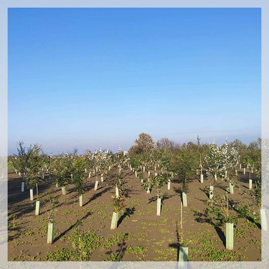 nuovo bosco nell'Oltrepò Mantovano